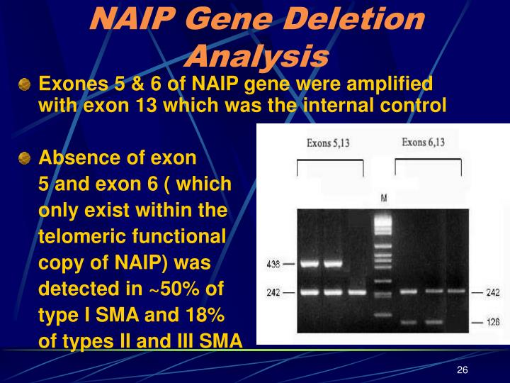 NAIP Gene Deletion Analysis