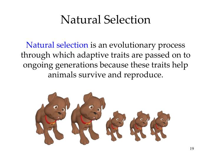Why Is Heritability Important For Natural And Artificial Selection