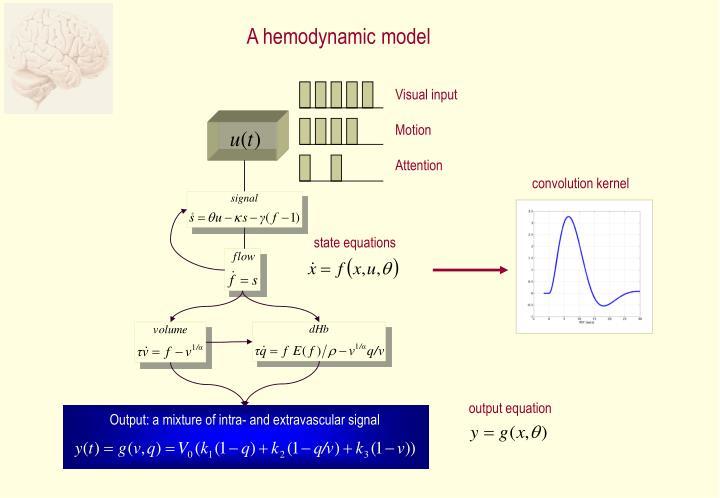 A hemodynamic model