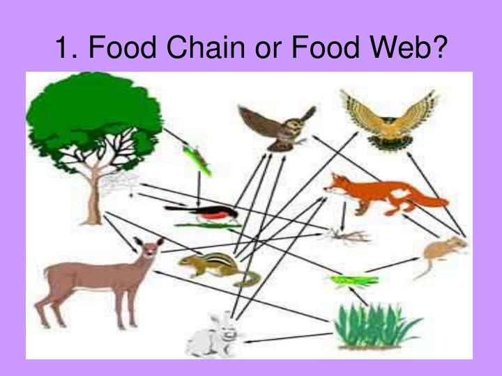 1. Food Chain or Food Web?