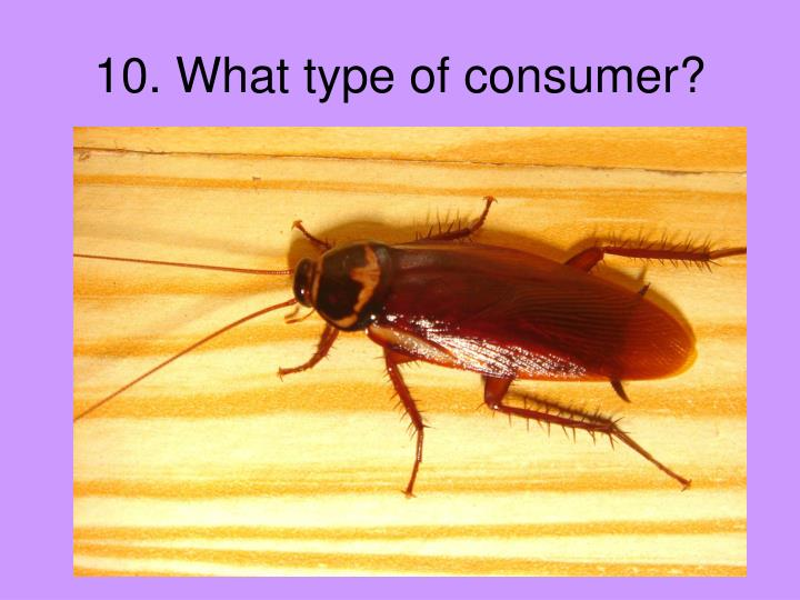 10. What type of consumer?