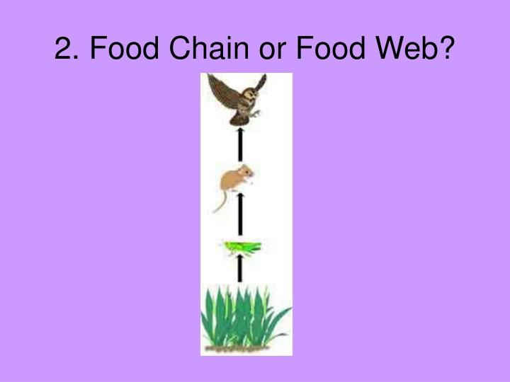 2. Food Chain or Food Web?