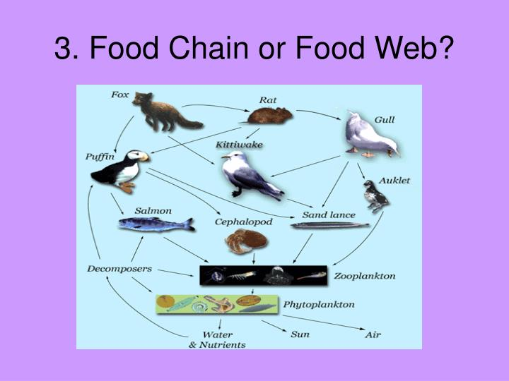 3. Food Chain or Food Web?