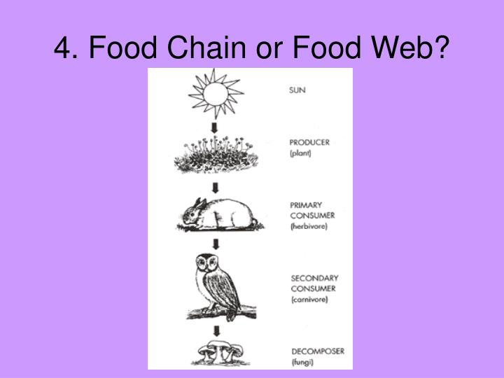 4. Food Chain or Food Web?
