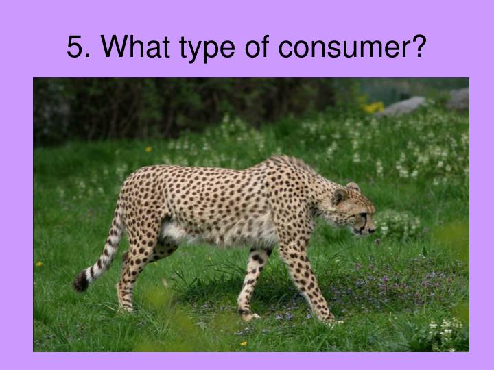 5. What type of consumer?