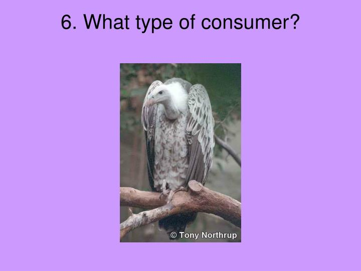 6. What type of consumer?