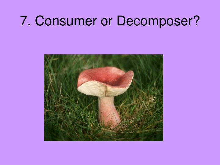 7. Consumer or Decomposer?