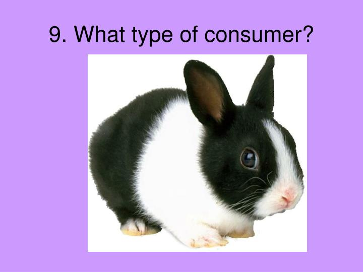 9. What type of consumer?