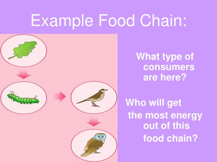 Example Food Chain: