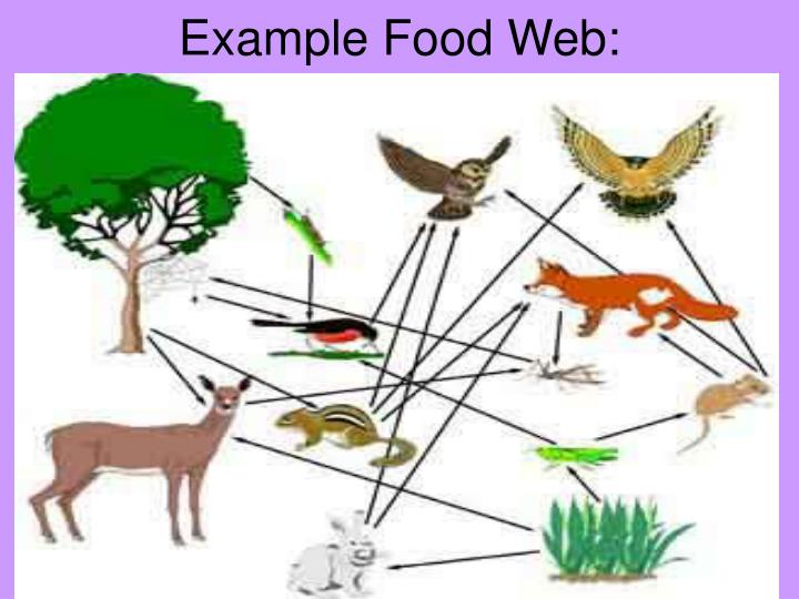 Example Food Web: