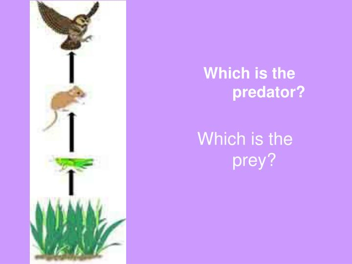 Which is the predator?