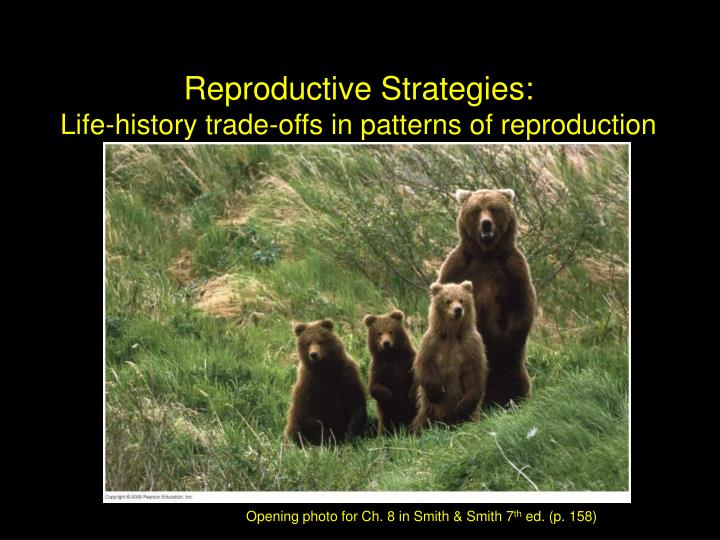 Reproductive Strategies: