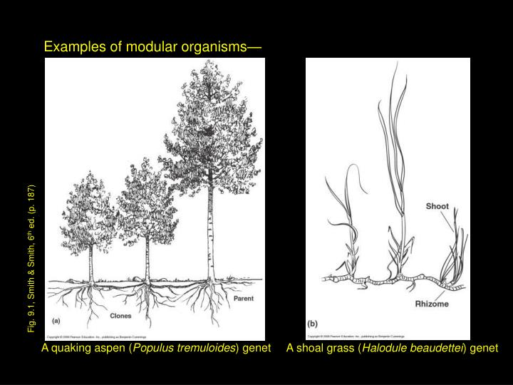 Examples of modular organisms—