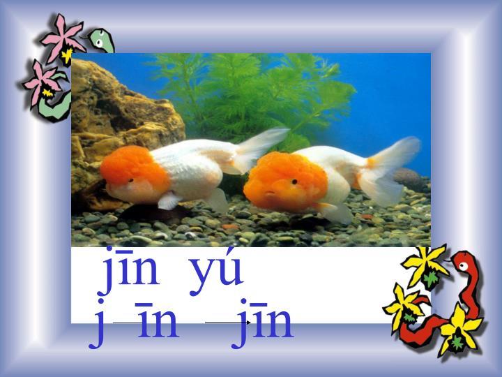 jīn  yú