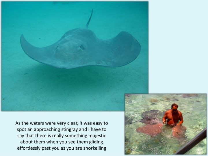 As the waters were very clear, it was easy to spot an approaching stingray and I have to say that there is really something majestic about them when you see them gliding effortlessly past you as you are snorkelling