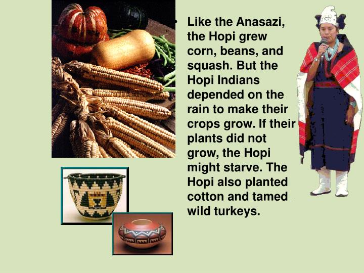Like the Anasazi, the Hopi grew corn, beans, and squash. But the Hopi Indians depended on the rain to make their crops grow. If their plants did not grow, the Hopi might starve. The Hopi also planted cotton and tamed wild turkeys.