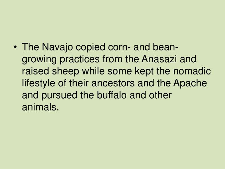The Navajo copied corn- and bean-growing practices from the Anasazi and raised sheep while some kept the nomadic lifestyle of their ancestors and the Apache and pursued the buffalo and other animals.