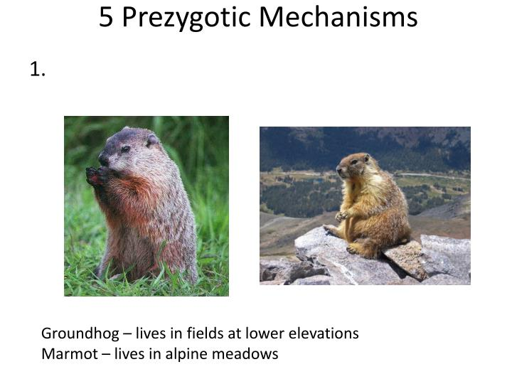 5 Prezygotic Mechanisms