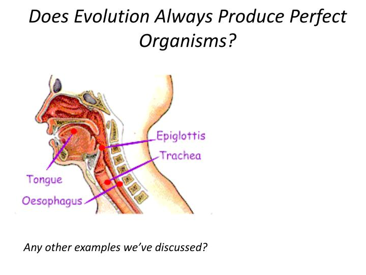 Does Evolution Always Produce Perfect Organisms?