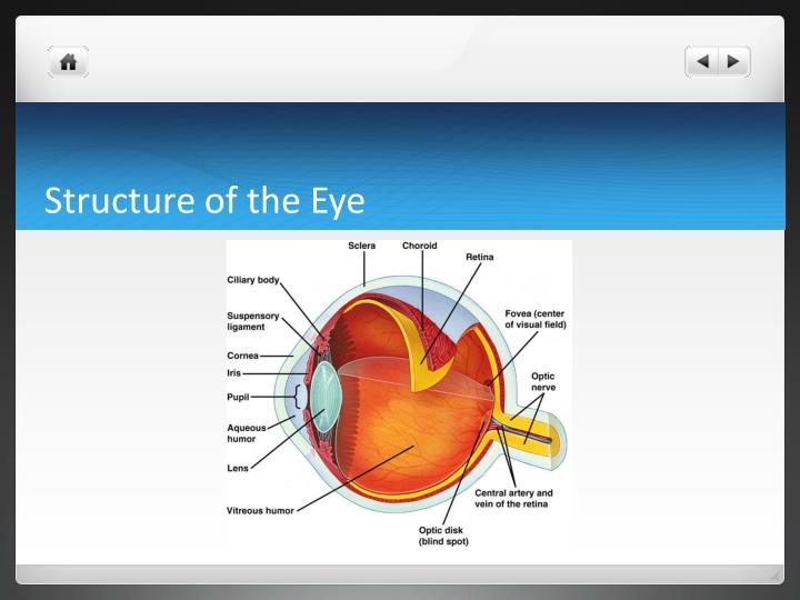 Structure of the eye