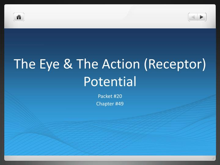 The eye the action receptor potential