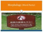 morphology word parts