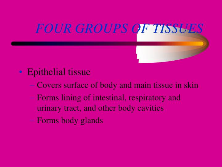 FOUR GROUPS OF TISSUES