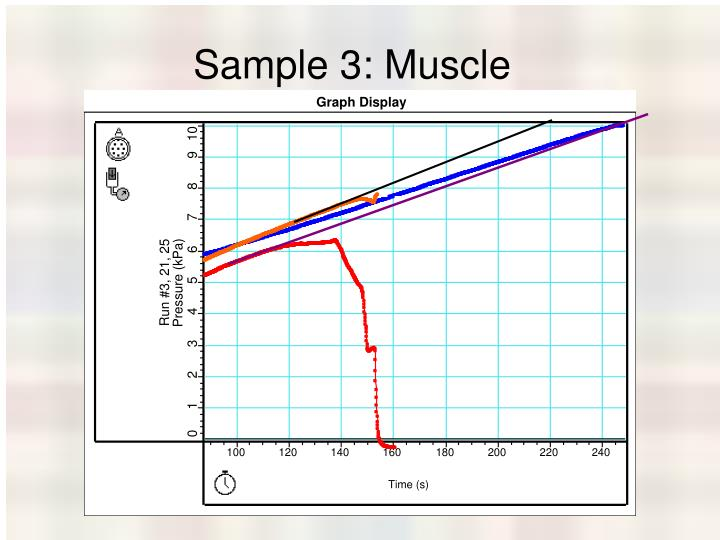 Sample 3: Muscle