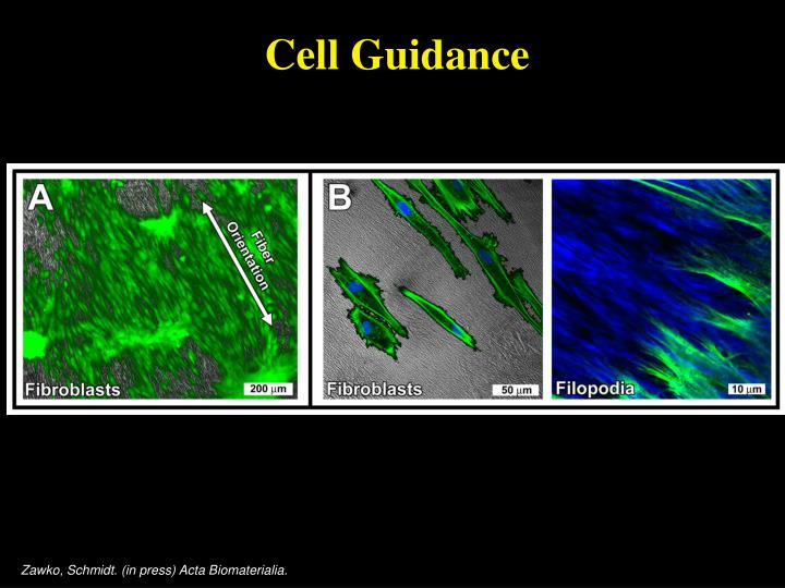 Cell Guidance