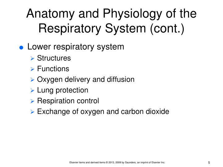 Anatomy and Physiology of the Respiratory System (cont.)
