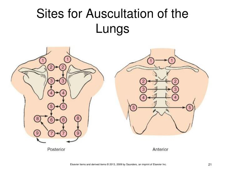 Sites for Auscultation of the Lungs