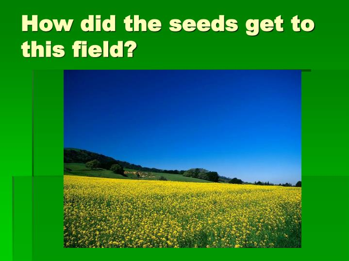 How did the seeds get to this field