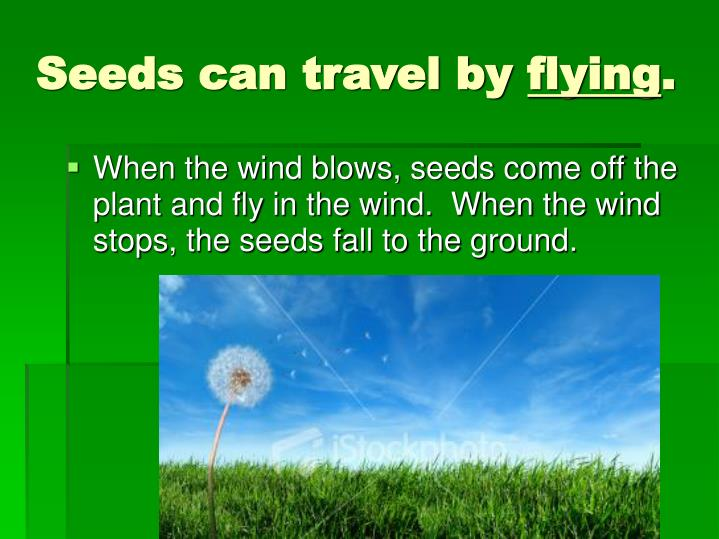 Seeds can travel by