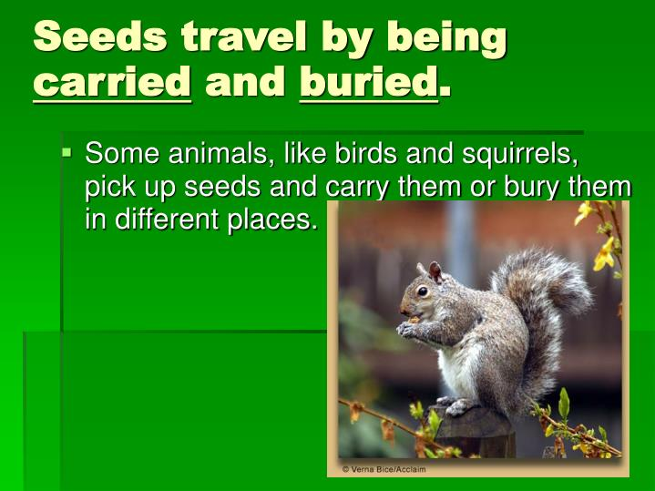 Seeds travel by being