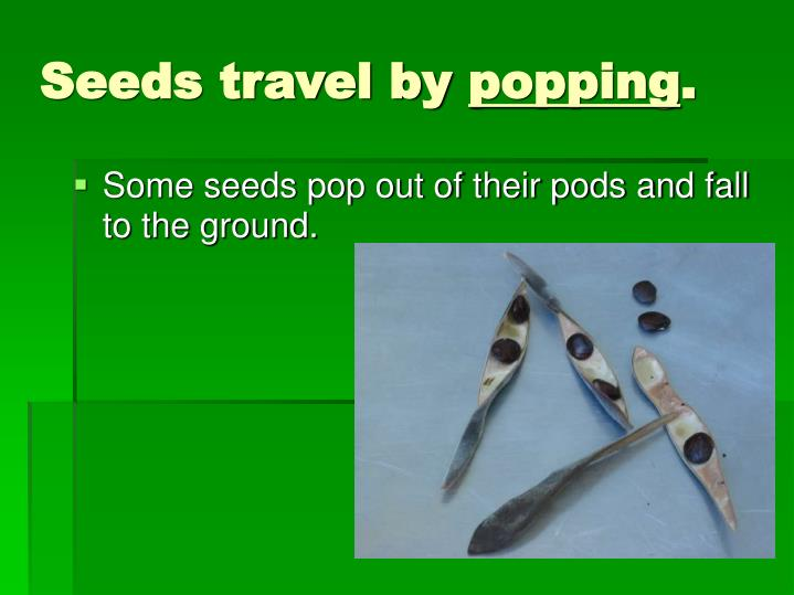 Seeds travel by