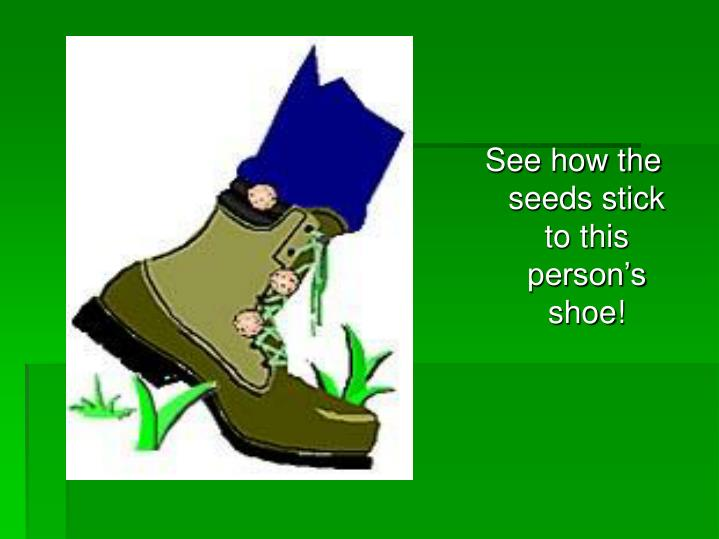 See how the seeds stick to this person's shoe!