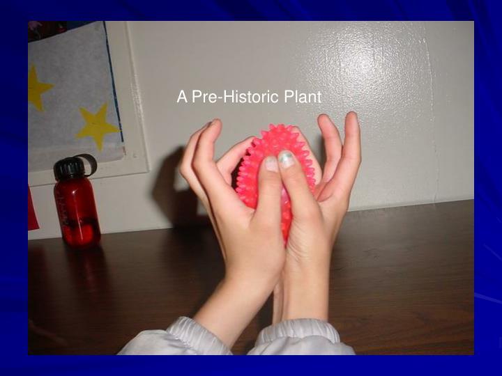 A Pre-Historic Plant