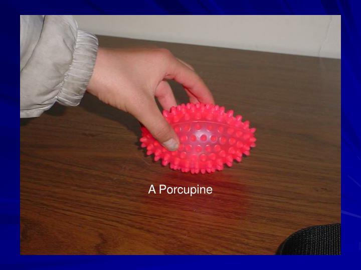 A Porcupine