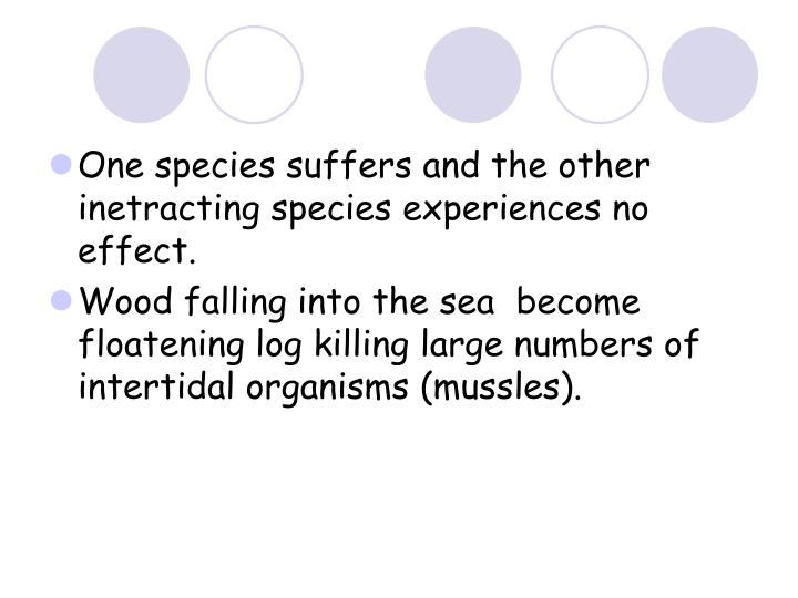 One species suffers and the other inetracting species experiences no effect.