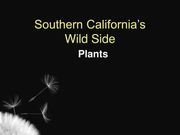 Southern california s wild side plants