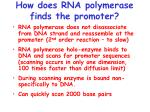 how does rna polymerase finds the promoter