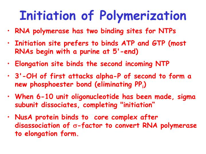 Initiation of Polymerization