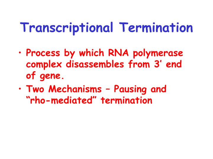 Transcriptional Termination