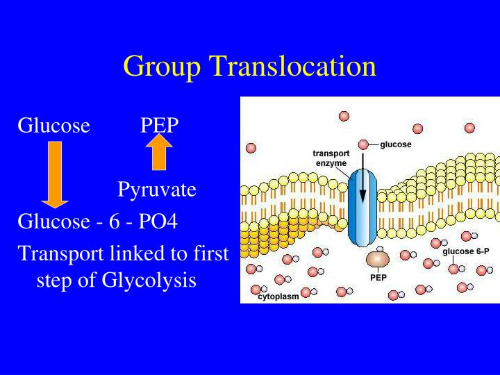 Group Translocation
