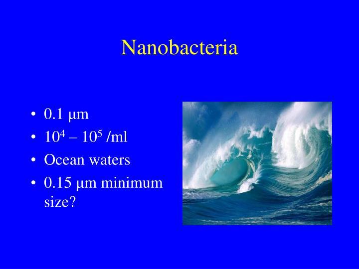 Nanobacteria