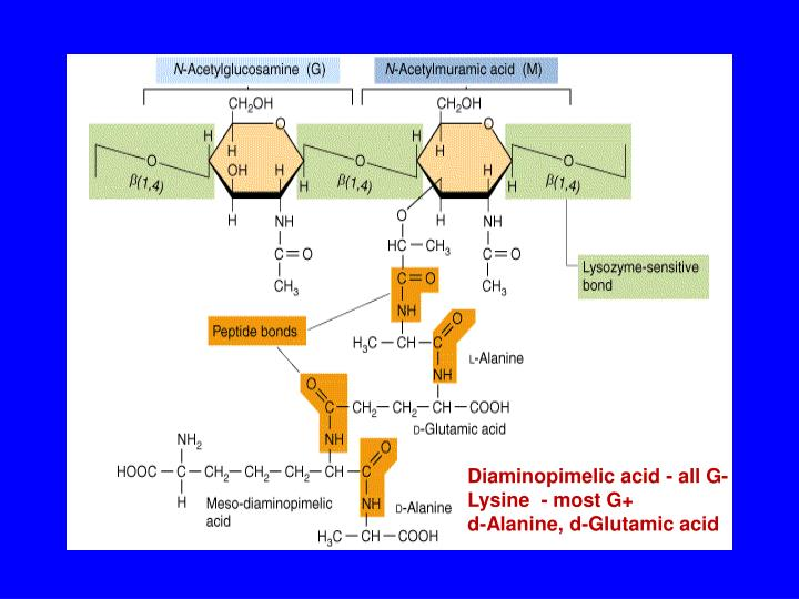 Diaminopimelic acid - all G-