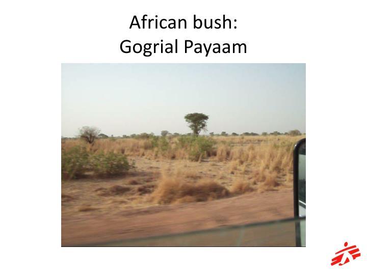 African bush:
