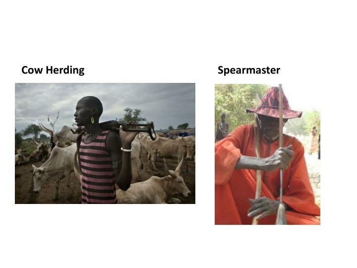 Cow Herding