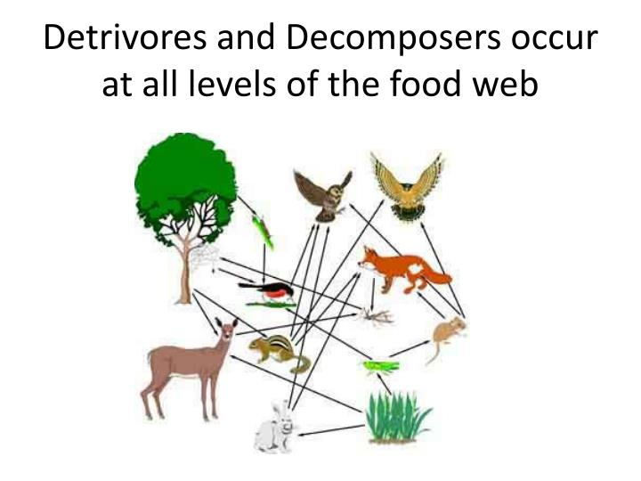 Detrivores and Decomposers occur at all levels of the food web