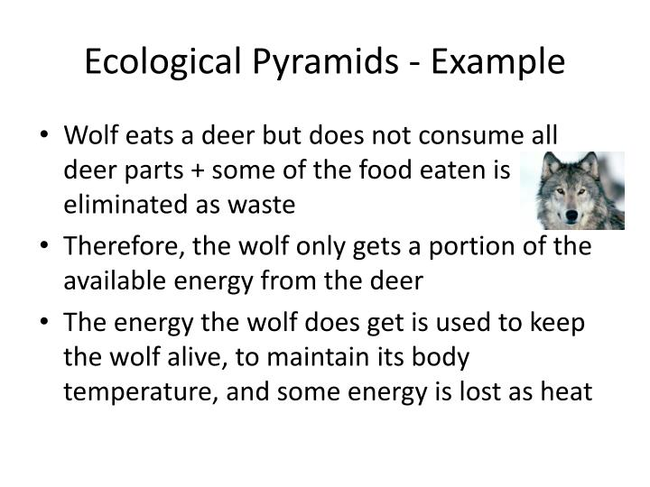 Ecological Pyramids - Example